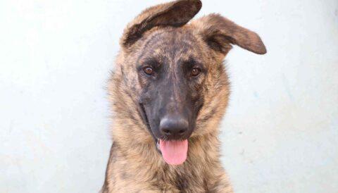 ג'נה – כלב לאימוץ - אגודת צער בעלי חיים בישראל