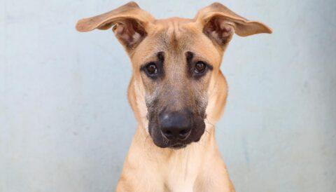 רקס – כלב לאימוץ - אגודת צער בעלי חיים בישראל