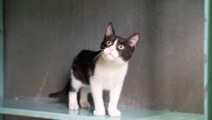 חתול לאימוץ- צער בעלי חיים ישראל
