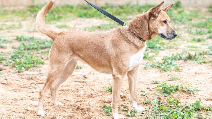 כלבה לאימוץ- צער בעלי חיים ישראל