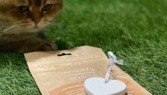 אימוץ חתול- אגודת צער בעלי חיים