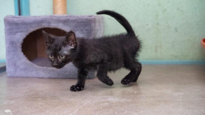 חתול אימוץ- אגודת צער בעלי חיים