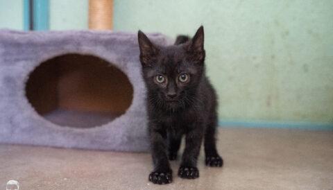 חתול לאימוץ- צער בעלי חיים