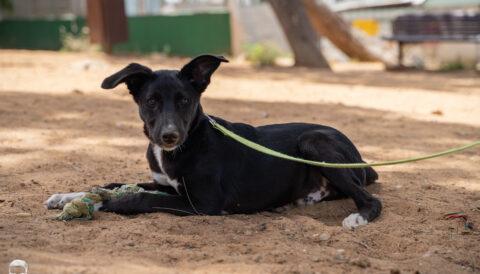 כלב לאימוץ- צער בעלי חיים ישראל
